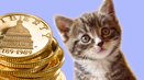 Cat_coins